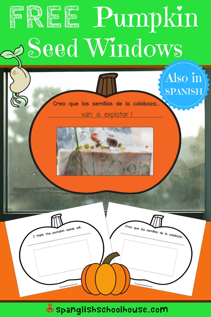 So you've carved the pumpkin....now what?  Don't throw all the innards away!  Here's an idea for some simple fall science fun called Pumpkin Seed Windows.