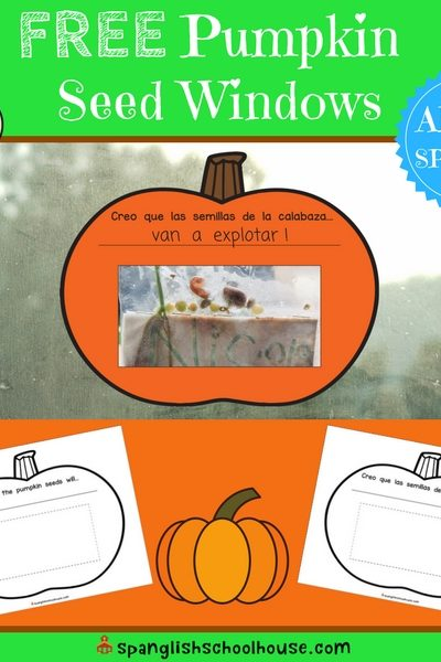Don't throw the seeds away after you carve that pumpkin! Try this simple science fun with pumpkin seed windows.